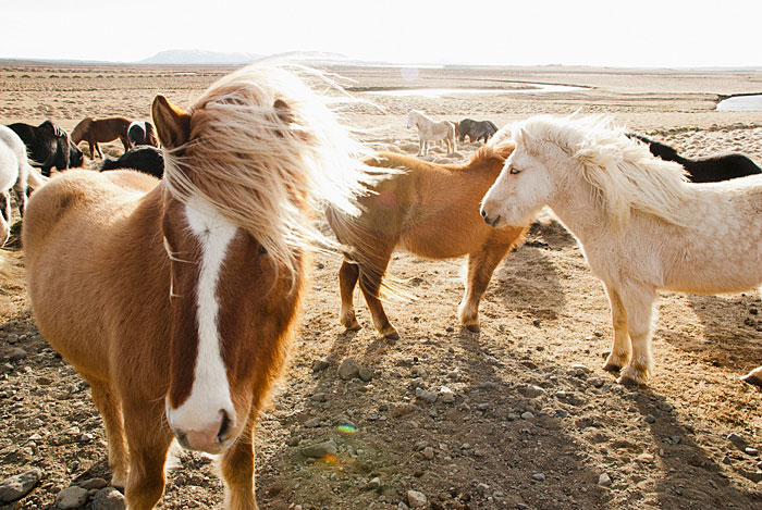 Omg look at these ponies with their fabulous hair